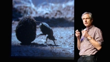 TED: Marcus Byrne: The dance of the dung beetle - Marcus Byrne (2012)