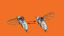 TED: Michael Dickinson: How a fly flies - Michael Dickinson (2013)