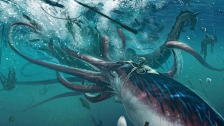 TED: Edith Widder: How we found the giant squid - Edith Widder (2013)