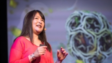 TED: Janet Iwasa: How animations can help scientists test a hypothesis - Janet Iwasa (2014)